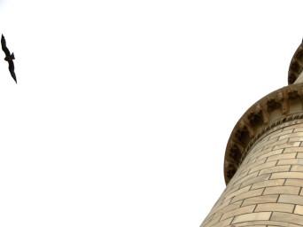 a bird flies away from a part of the Taj Mahal